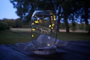 fireflies_flickr