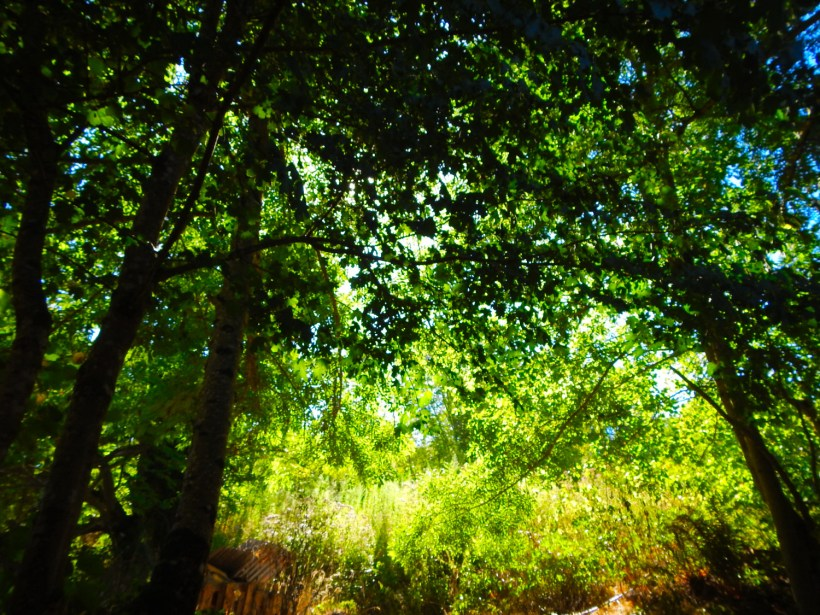 dscn1061_053-forest