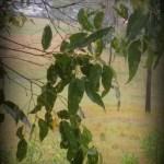 rainy day picasa edit