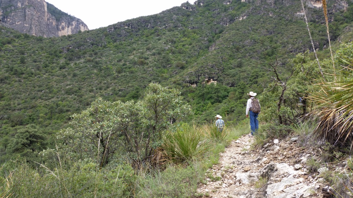 McKittrick Canyon Hike