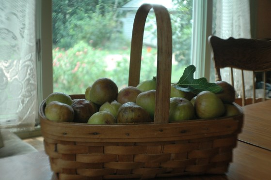 Basket full of Figs