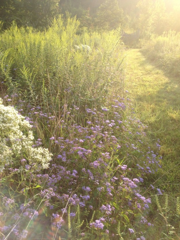 Wildflower garden on our path this morning--Planted and arranged by God