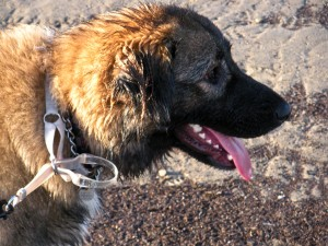Mattie at the End of the Beach