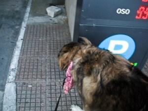 0000 - Pets - 20110415 - 011