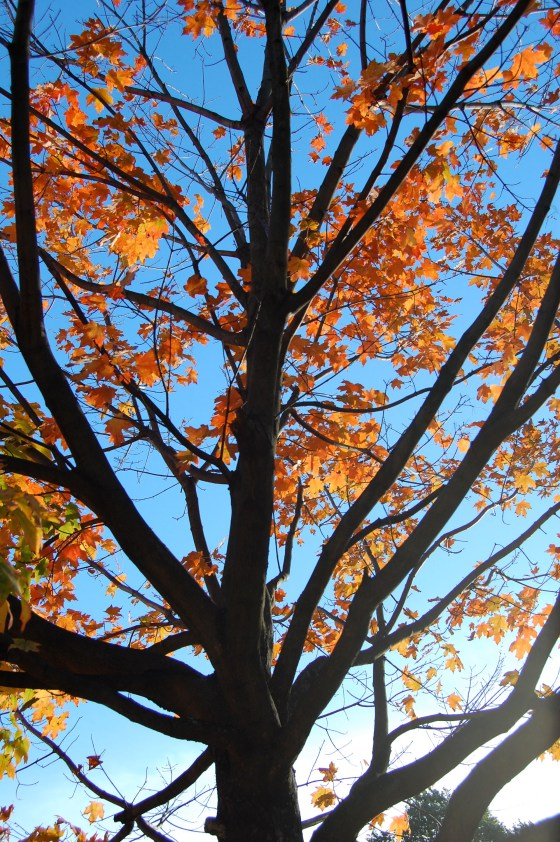 blue orange leaves