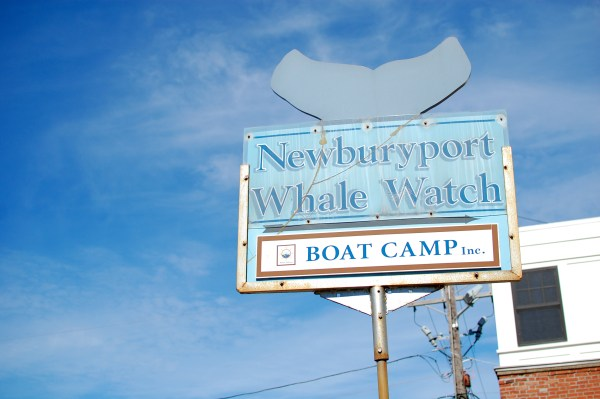 Newburyport Whale Watches
