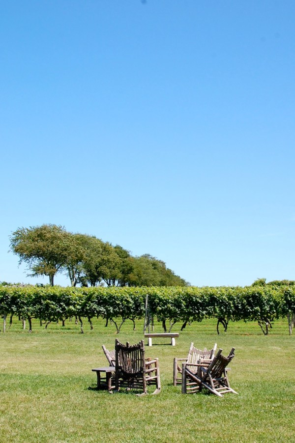 carolyn sakonnet vineyard