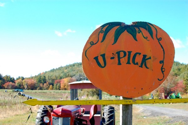 MA U-Pick Farms