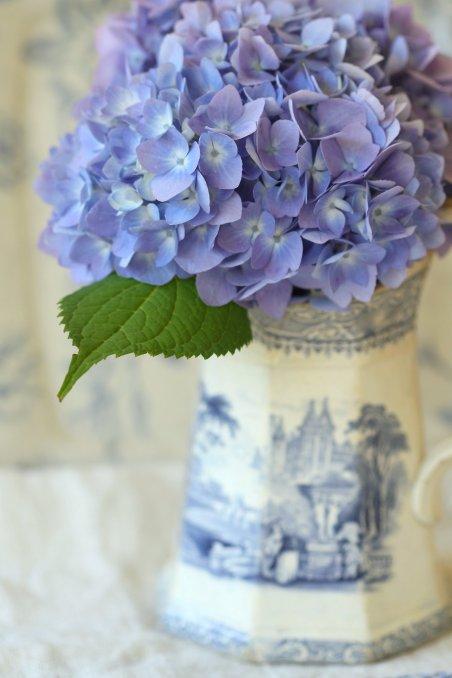 Blue Hydrangea in Vase
