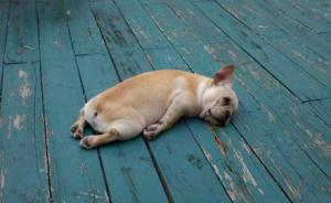 Struggle Puppy