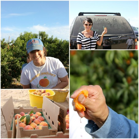 Masumoto Farms, Melissa's Produce grower tour, Adopt a Peach Tree Program