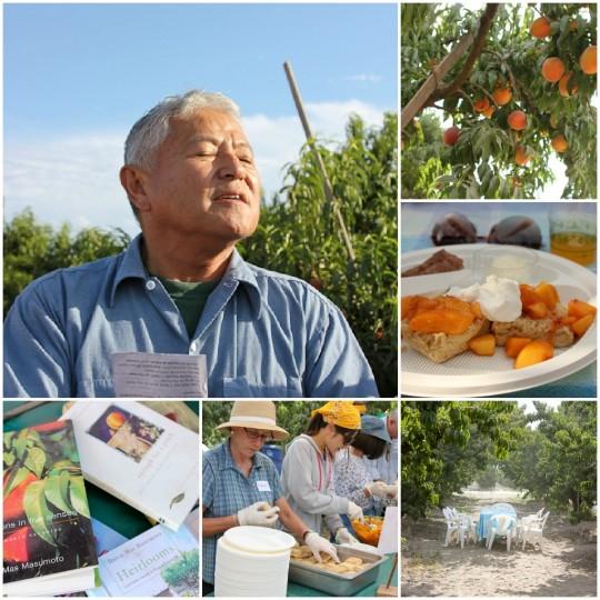 Masumoto Farms, Adopt a Peach, Melissa's Produce grower tour
