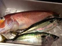 ちょいと。栞屋 おすすめの魚の数々