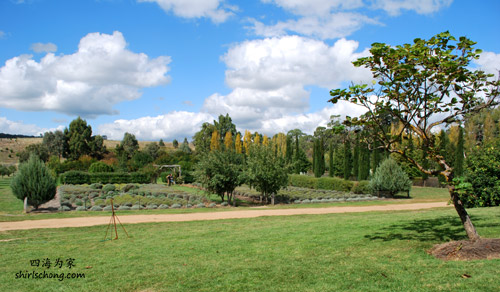 Lavender Farm, Daylesford