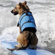 Dog Life Jacket Summer