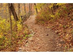 trail branford