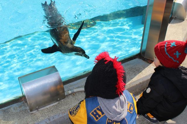 東武動物公園でお金をかけずに楽しむ!動物だけでも子供は喜ぶ