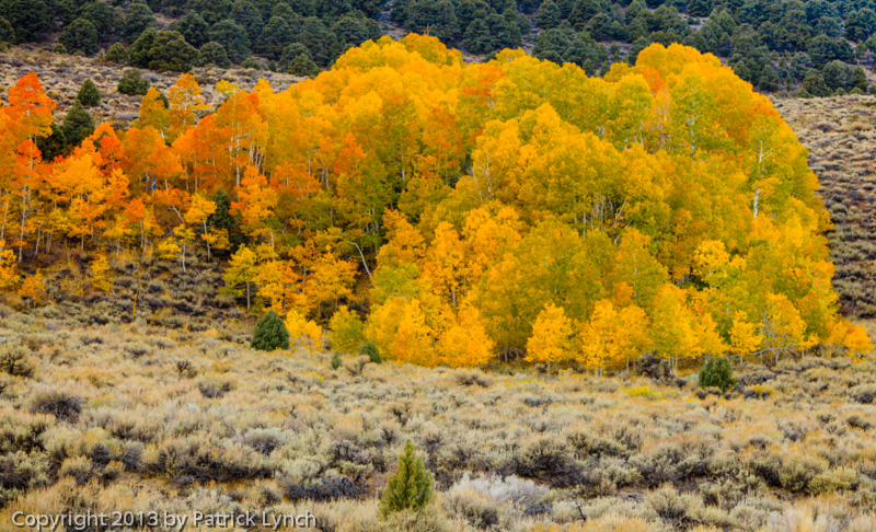 PL20131011-Fall-Colors-0817_8_9