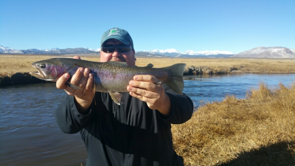 Mammoth lakes fly fishing report upper owens river 12 for Bishop fishing report