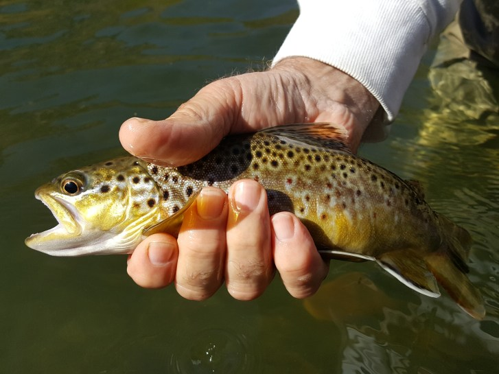 Eastern Sierra Fly fishing guide, Mammoth Lakes Fly Fishing