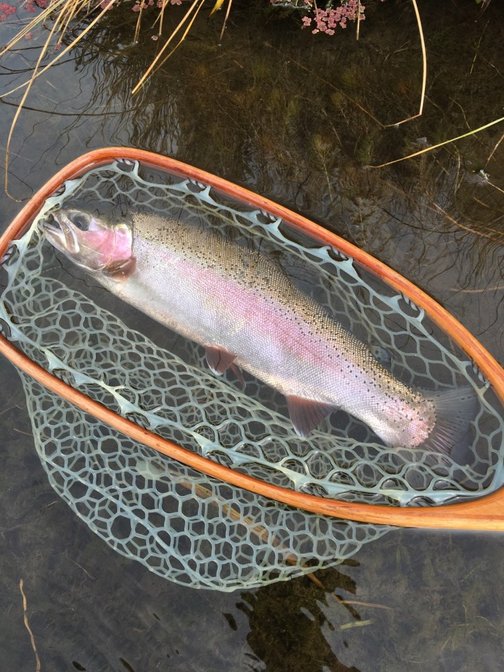 Upper Owens River Fly Fishing, Mammoth Lakes Fly Fishing, eastern Sierra Fly fishing guide