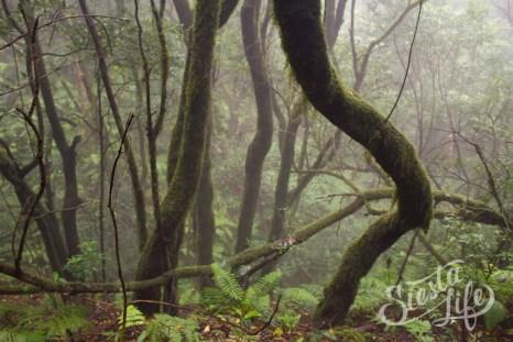 Анага: лес в тумане
