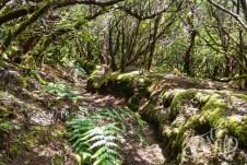 Анага: тропинка через реликтовый лес