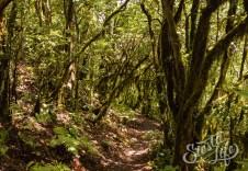 Анага: тропинка пешего маршрута через лес