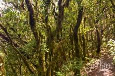 Анага — красивейший лавровый лес