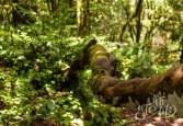 Анага: сказочное место на Тенерифе