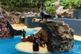 шоу морских котиков в Лоро-парк