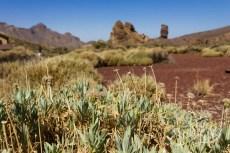 Растительность национального парка Тенерифе