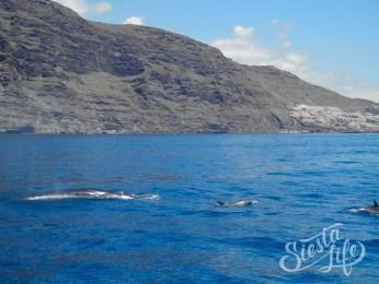 Flipper Uno: дельфины и киты