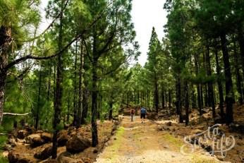 Дорога через лес на пешем маршруте к цветущему миндалю на Тенерифе