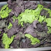 Dehydrator Kale Chips- Oil-Free