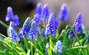 el azul en la naturaleza