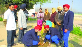 Members of the Ecology Club plant saplings at Manav Vidya Mandir in Ludhiana