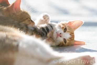 Katten in Griekenland | simoneskitchen.nl