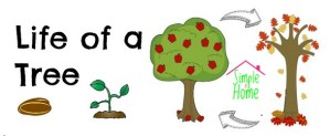 life of a tree - be an Earth Day Super Star