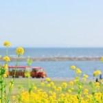 沸騰ワード10|日本一美しい海辺と隠れキリシタンの協会たち 長崎の「福江島」に行くべき理由