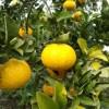 沸騰ワード10 大崎上島に行きたい!時が止まったような街並みと柑橘の匂い