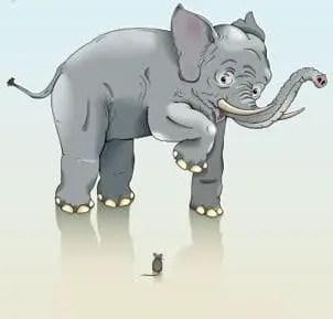 elephantmouse.jpg