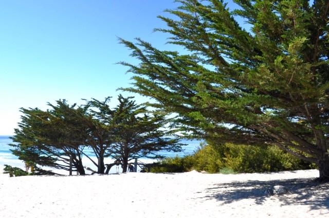Carmel Beach Landscape - Simple Sojourns