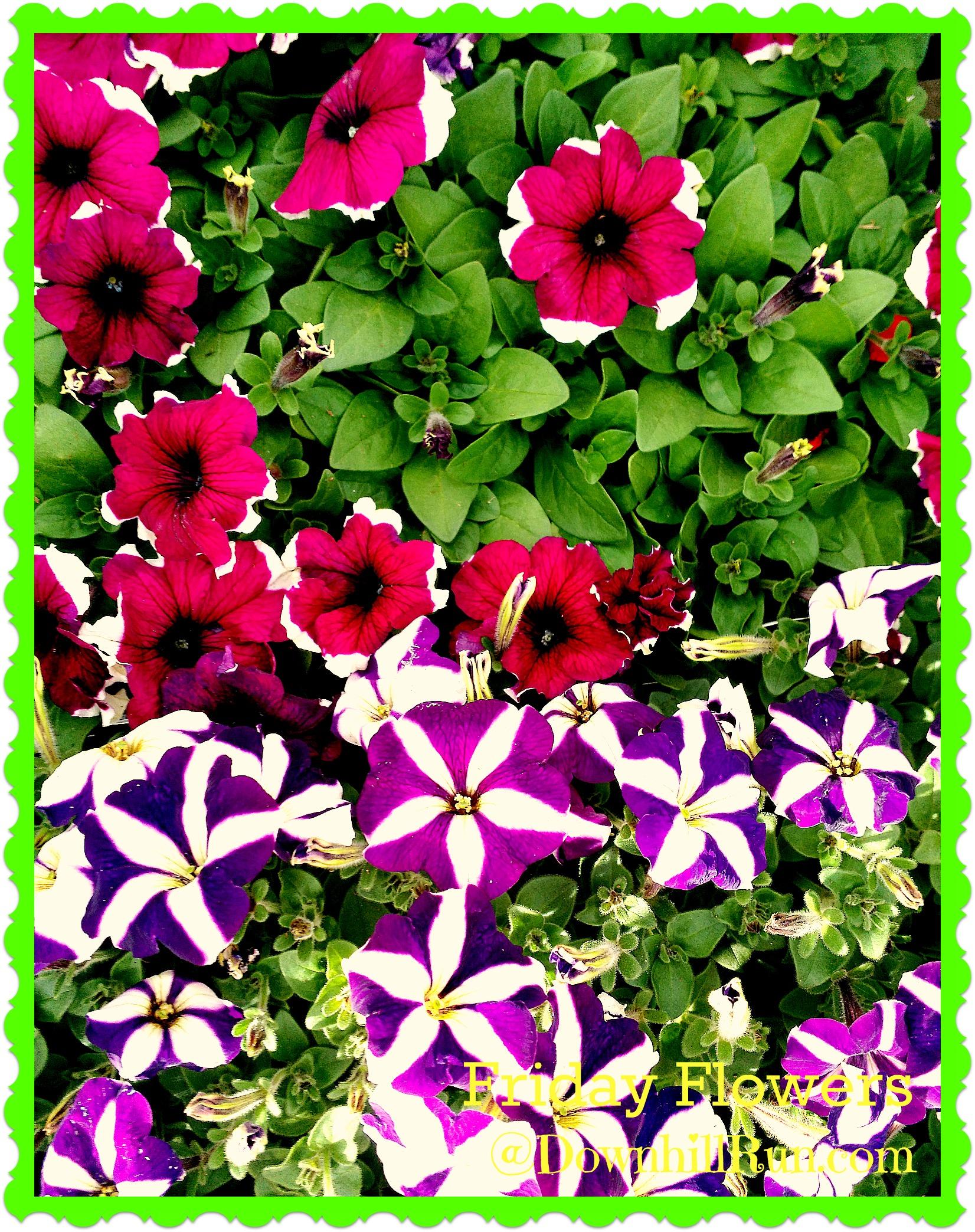 Friday Flowers Simplestepsforlivinglife