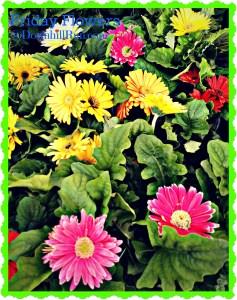 Walmart in March flowers 4