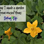 How I Made a Garden from Recycled Items