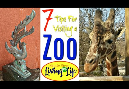 Tips for visiting a Zoo During a Vacation or Staycation
