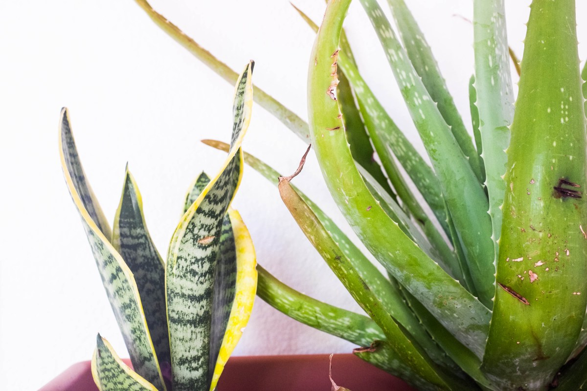 Plant Parenthood: How To Avoid Killing Your Succulents