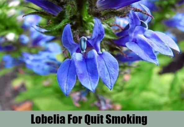 Licorice To Stop smoking