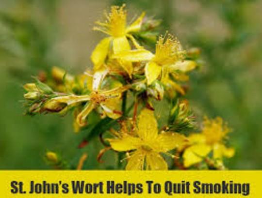 St. john's wort To Stop Smoking